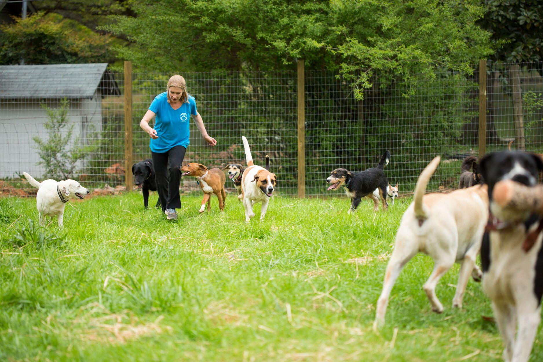 Dog Rescue Canton Ga